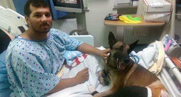 Un soldado y su perro herido son atendidos en la misma habitación de hospital