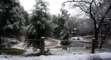 Galería: Así fue la nevada en Chipinque, Monterrey