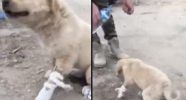 Soldados ayudan a un cachorro que se lesionó al pisar una mina de ISIS