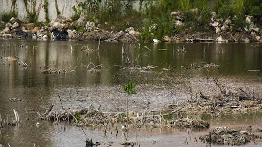 #SalvemosTajamar: La Semarnat defiende la destrucción de manglares en Cancún