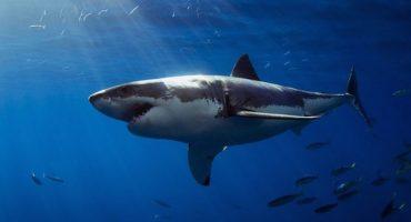 ¡Un monstruo marino se come a un tiburón de un bocado!