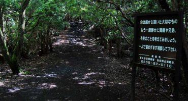 Aokigahara, el bosque de los suicidios: ¿leyenda, realidad o el escenario perfecta para una película?