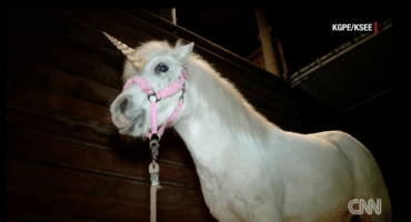 WTF?! Un unicornio es perseguido por la policía de California