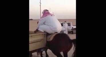 Video: Caballo no puede cargar a un hombre con sobrepeso