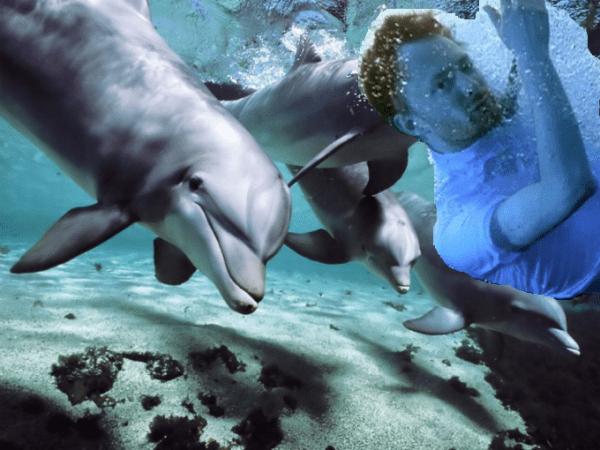 Aparentemente, a los delfines les encanta escuchar a Radiohead
