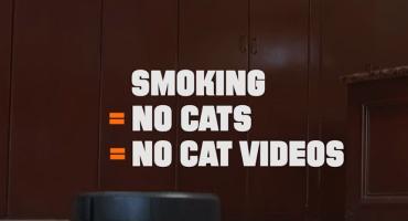 #Catmageddon El video sobre gatitos que te pide dejes de fumar