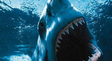 Un video que muestra de cerca al Tiburón Blanco más grande encontrado