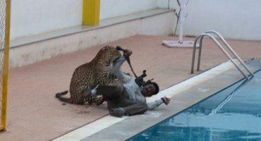 Leopardo causa pánico en escuela de la India