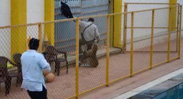 Leopardo que causó pánico en una escuela en la India, escapa de su prisión