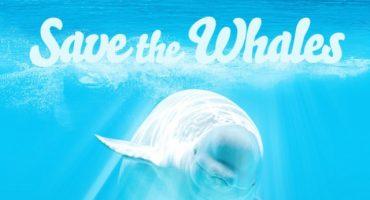Ayuden a Pornhub a salvar a las ballenas; sólo necesitan ver porno