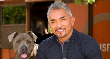 Cesar Millán, el encantador de perros, es acusado por crueldad animal