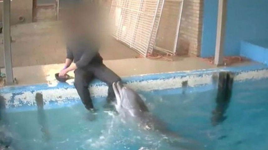 WTF?!?! Delfín es masturbado por su cuidador en Holanda