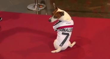 Perro asiste al Memorial de Johan Cruyff... ¡vestido como Cristiano!