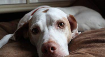 Mujer mata a su perro para no pagar la eutanasia en el veterinario