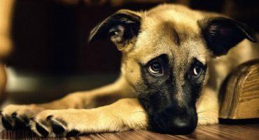 La reacción de este perro que fue abandonado, es lo más triste que verán el día de hoy