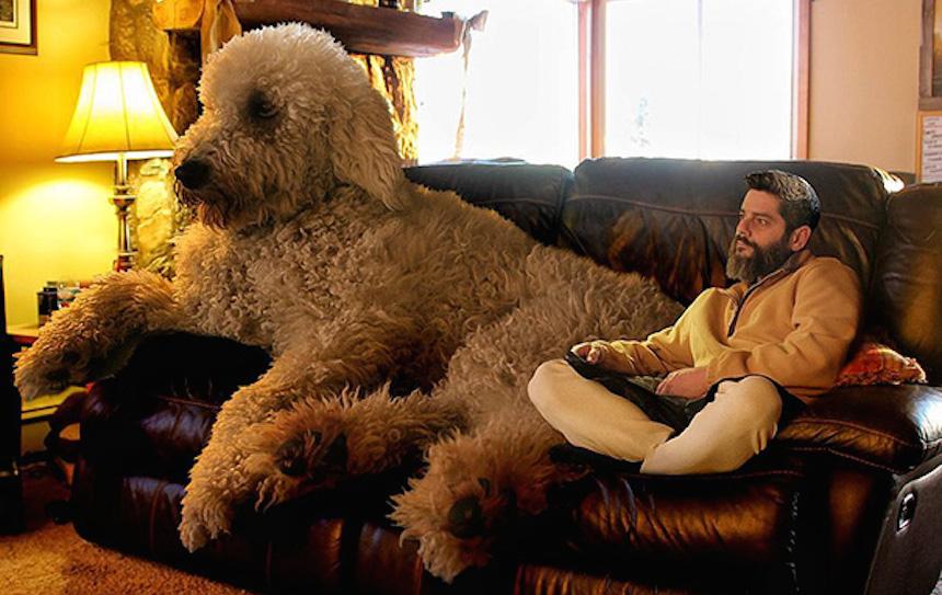 El lindo photoshop de este fotógrafo a su perro les dará un ataque de ternura
