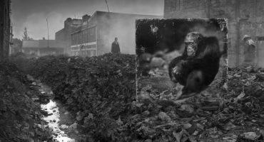 Inherit The Dust: Fotografías que muestran el cambio en la fauna de África