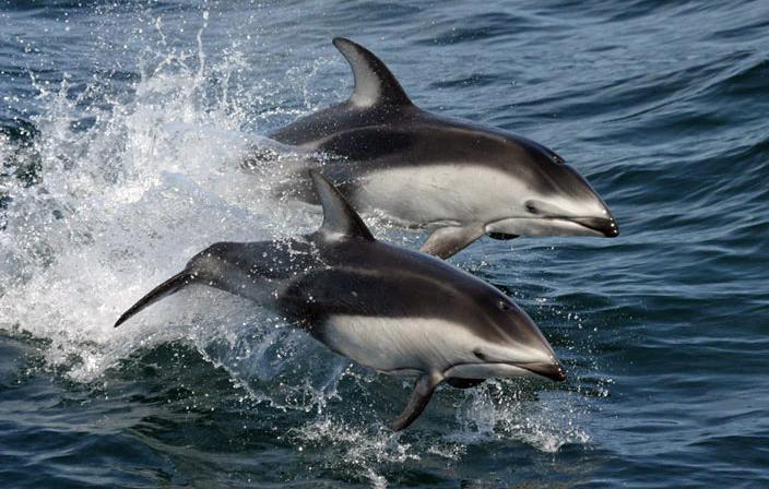 Awww! Chequen el video del nacimiento de un delfín