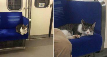 Este gatito sabe como usar el metro y se porta mejor que muchas personas