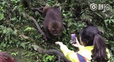 El video de un hábil mono que le arrebata el celular a una chica