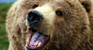 ¡Este hombre alejó a un oso de una manera épica!