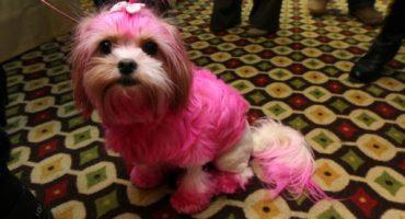 Un perrito se comió una caja de crayones; los resultados son mágicos y coloridos