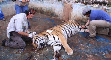 ¿Por qué se registran animales enfermos en zoológicos de la CDMX?