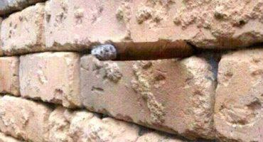 ¿Pueden adivinar qué es lo que hay en esta pared?