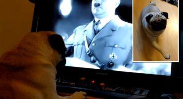Por enseñarle a su perro a hacer el saludo Nazi, lo arrestan