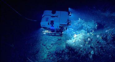 El streaming que te lleva a un viaje por lo más profundo del océano
