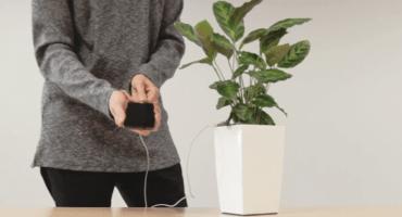 'Bioo Lite': recarga tu celular con la energía de una planta