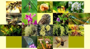 Con ustedes: ¡Las 10 nuevas especies más geniales del año!