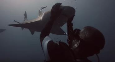 Para recuperar la fe en la humanidad: La amistad de un tiburón y un humano