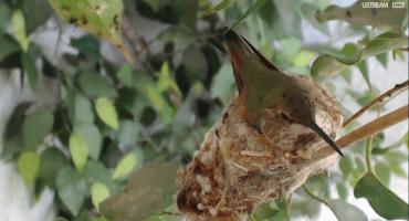 Aquí 10 webcams para ver diferentes animales en vivo