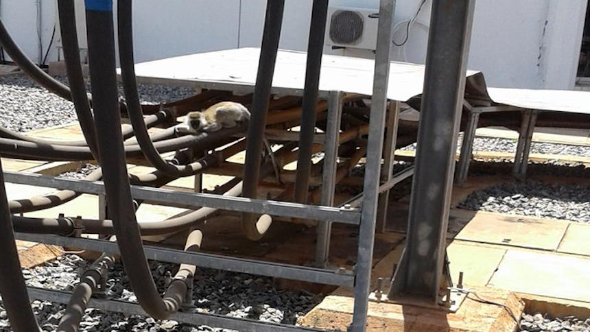 Kenia se queda sin energía eléctrica gracias a un mono
