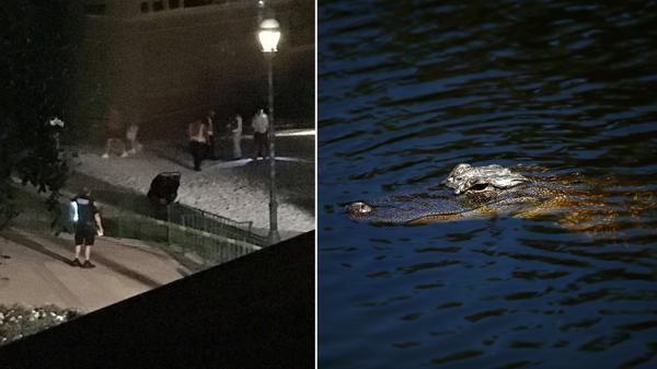 Disney responde tras el ataque del cocodrilo; no asumen ninguna responsabilidad