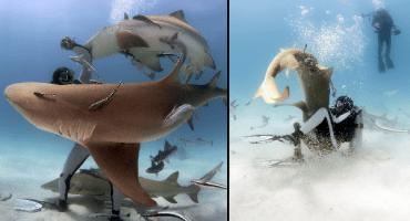 ¡Ahora hay un encantador de tiburones que deja que estos lo muerdan!