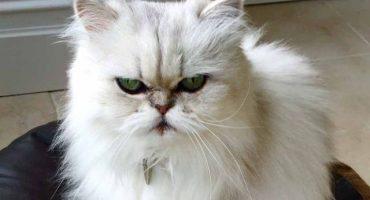 WTF? Una pareja llama a la policía para reportar que son rehenes de… ¿su gato?