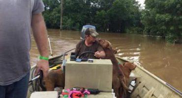 Padre e hijo recorrieron Texas salvando perritos de inundaciones