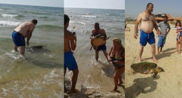 Turistas se toman fotos con tortuga marina que tenía grave herida en su cabeza