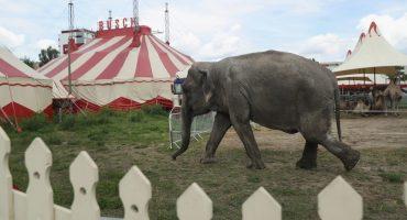 Armando Guadiana propone que animales regresen a circos