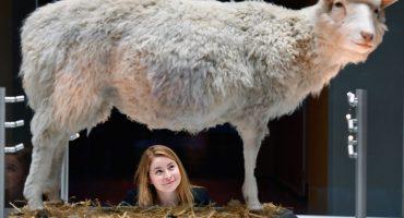¡El ataque de los clones! A 20 años del nacimiento de la oveja Dolly
