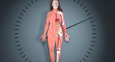 Este video muestra varios procesos del cuerpo con el paso del tiempo