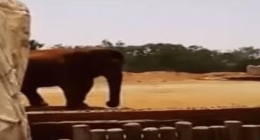 Elefante mata accidentalmente a una niña en un zoológico de Marruecos
