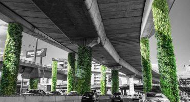 Inicia proyecto de jardines verticales en Anillo Periférico