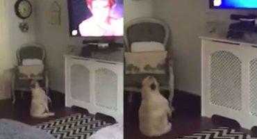 Este perrito que baila frente a la tele nos enseña como disfrutar de la vida