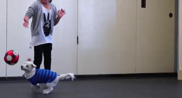 Una niña crea un lenguaje de señas para comunicarse con su perro sordo