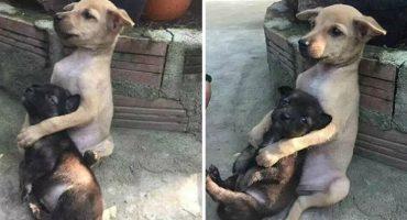 Aún después de ser rescatados de la calle, estos perritos son inseparables