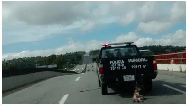 Policías de Zempoala son captados arrastrando a un perro con su automóvil