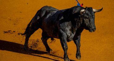 Si un toro mata a un torero, sacrifican a su familia por... ¡¿Tradición?!